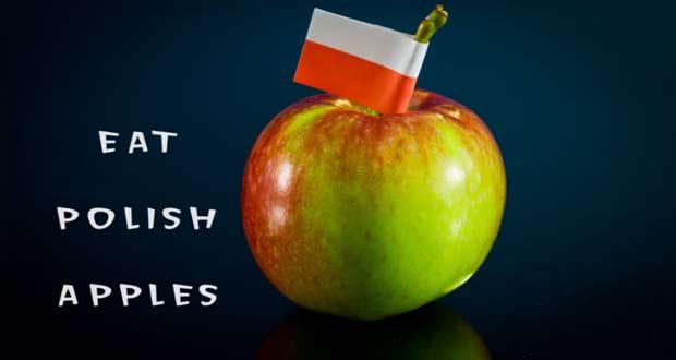 Польские яблоки: рекордные урожаи без рынков сбыта
