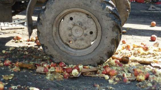 За 3 года Россельхознадзор уничтожил 25 тыс. тонн овощей и фруктов