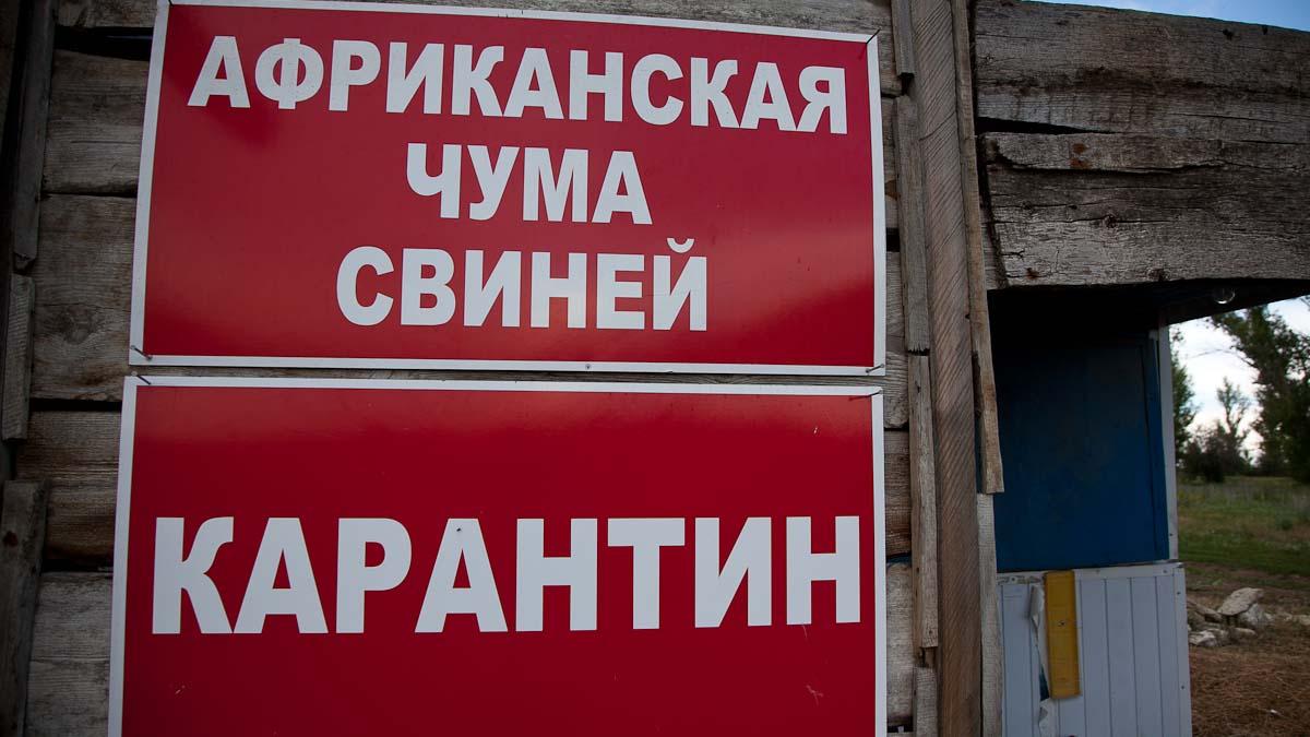 Беларусь ограничивает ввоз свинины из Иркутской области России из-за АЧС